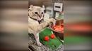 Приколы с животными 2019 10 Смешные видео про котов и собак до слез 2019 Животные кошки собаки 2019