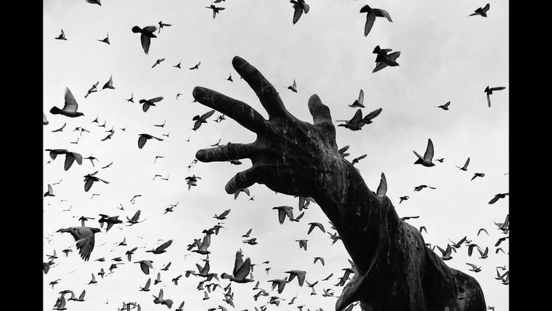 Şehrin Kuşları 2020 Nazım Tetik