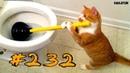 КОШКИ 2019 Смешные коты приколы с котами до слез – Смешные кошки 2019 – Funny Cats