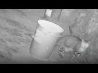 Волонтёры уже 17 дней спасают бездомную кошку