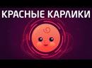 Последняя Звезда во Вселенной - О Красных Карликах в двух словах | Kurzgesagt на русском | kvashenov