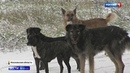 Трагедия под Истрой собак людоедов прикармливали на местном складе