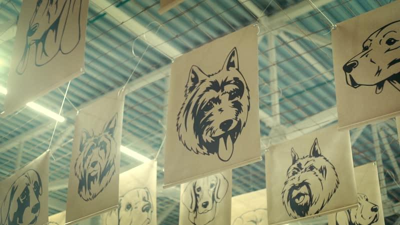 Международная выставка собак – 2020