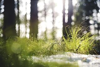Каждый год 22 апреля отмечается Международный день Матери-Земли (International Mother Earth Day).
