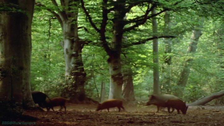 BBC Жизнь млекопитающих 6 Преимущества