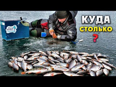 Пулемётный клёв плотвы Вот это первый лёд 2 Зимняя рыбалка
