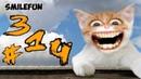 КОТЫ 2020 Смешные Кошки и Коты ПРИКОЛЫ С КОТАМИ 2020 Funny Cats