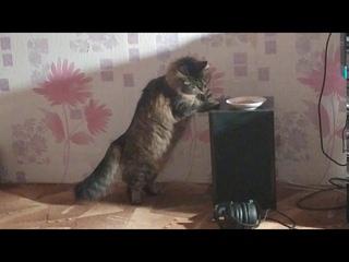 Моя кошка Лиза ворует еду у другой кошки )
