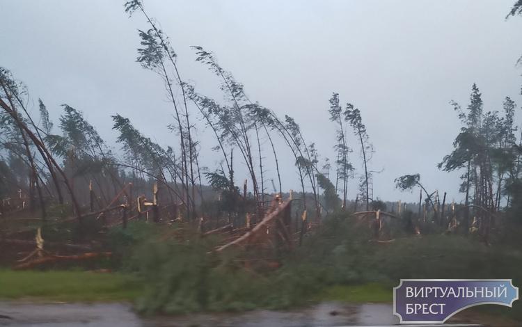 Ветер ломал деревья как спички... Лес буквально перестал существовать
