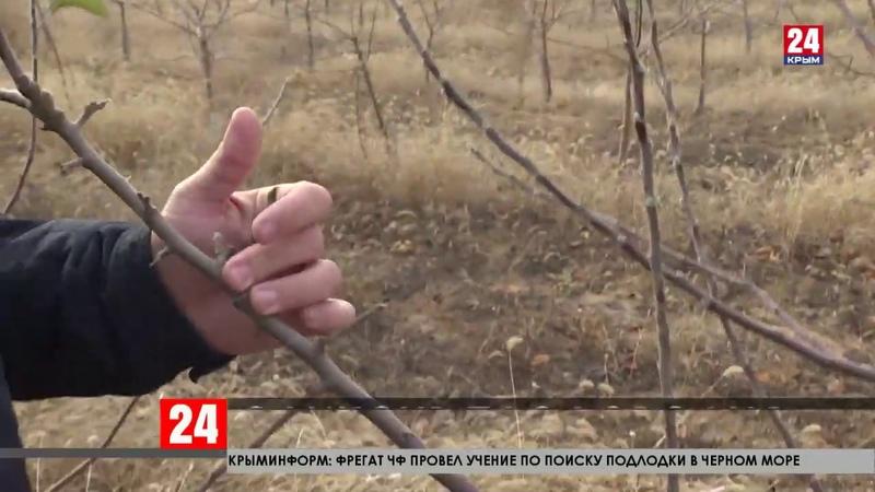 Супер чернозём в Крыму Учёные КФУ создали эликсир плодородия