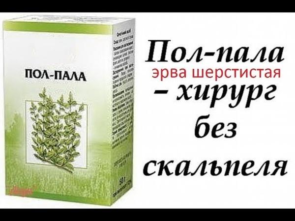 Пол-пала (Эрва шерстистая) леченая трава/как растворить камни в почках и желчном
