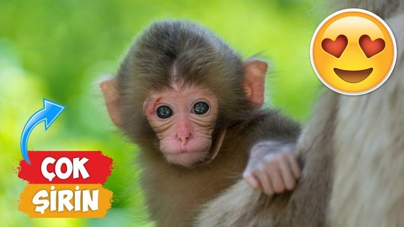 En Şirin Yavru Maymun Videoları Derlemesi! | [2018 Derleme] ● Eğlenceli Anlar