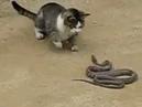 «Кошак против змеи». Убил и съел