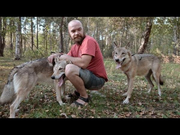 Мужчина сохранил жизнь этим волчатам а через год волчица щедро отблагодарила его