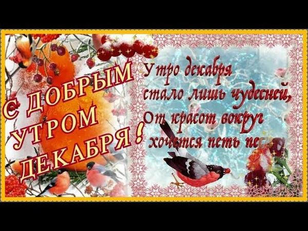 С ДОБРЫМ УТРОМ ДЕКАБРЯ! Желаю хорошего декабрьского утра! видео открытка