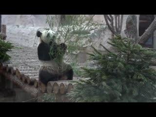 #Москвастобой Экскурсия по зоопарку