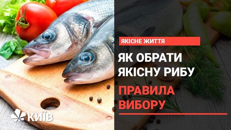Основні правила при виборі свіжої риби корисні поради