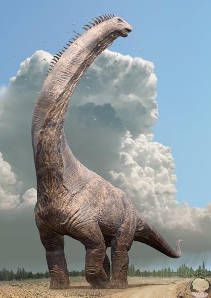 Позвонок аргентинозавра и предположительное изображение его внешнего вида.