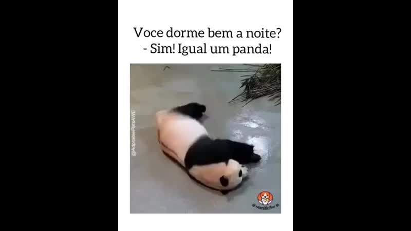 Você dorme bem a noite Sim Igual um panda