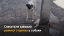 Воссоединение мамы собаки и щенка