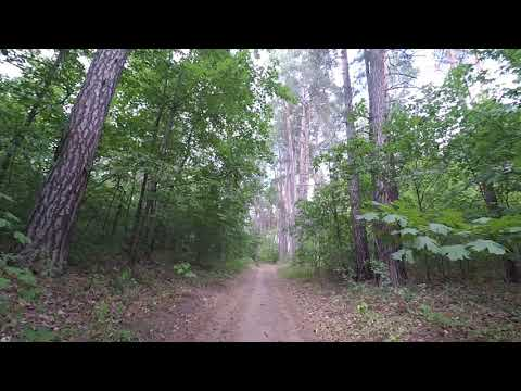 Дивный лес