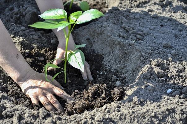 Как быстро очистить и отбелить руки после сада
