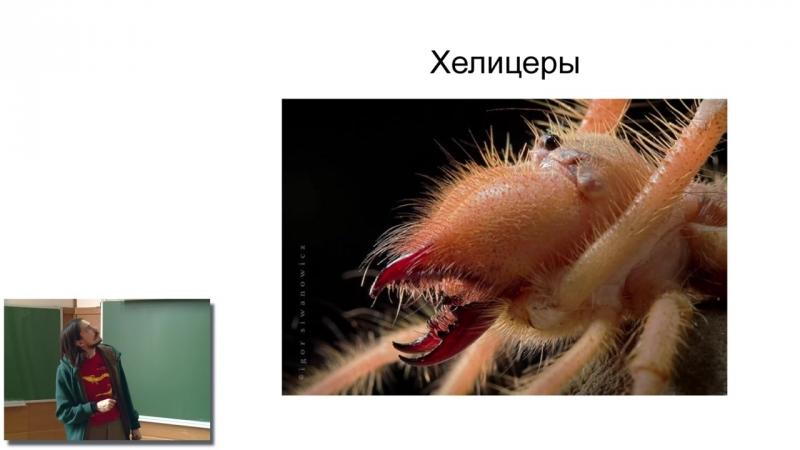 Основы биологии (22). Metazoa (3). Ecdysozoa и Echinodermata.