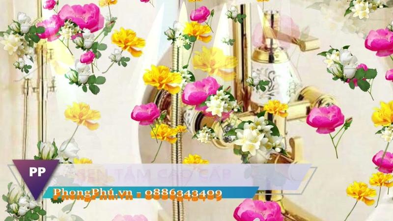 Phong Phú Sen cây tắm cao cấp