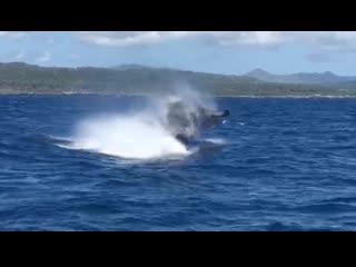 Внезапно... Горбатый кит