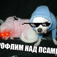 Рофлим над псами