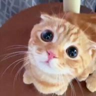 id_40179 Как мой кот выпрашивает еду 😁  #gif@bon