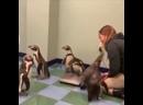 А вы не знали,что есть такая работа- взвешивальщик пингвинов!