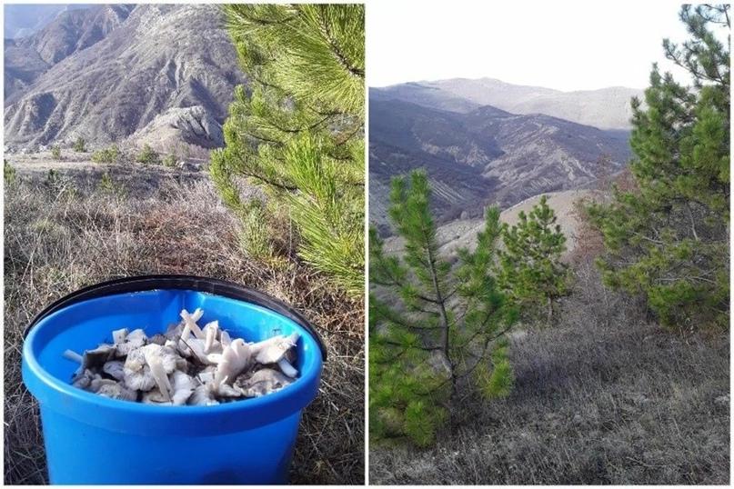 В Крыму 1 января ведрами собирают грибы