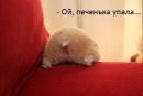 Фотоальбом Анны Амосовой