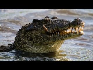Житель Флориды залез впасть каллигатору ивызволил щенка