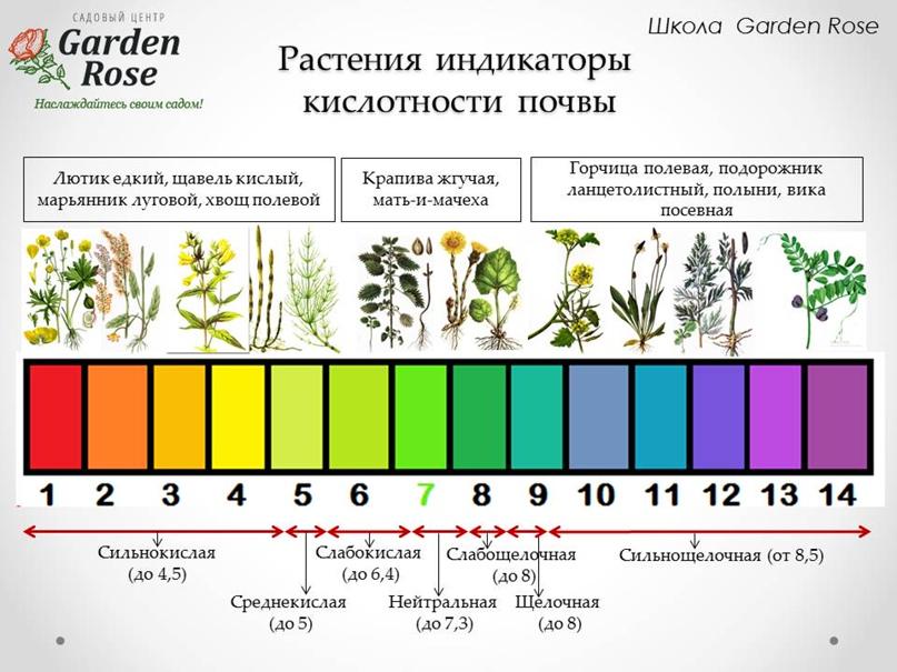 Растения-индикаторы в Вашем саду, изображение №1
