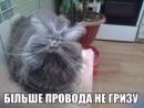 Фотоальбом Ілли Шевчука