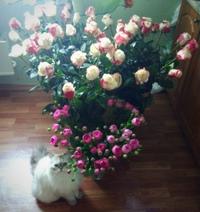 Катя Иванова фото №35
