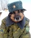 Степан Пелепец, 51 год, Иваново, Россия