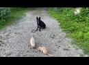 Немецкая овчарка Линда! 7 месяцев! Команда сидеть с котами! Железная выдержка!