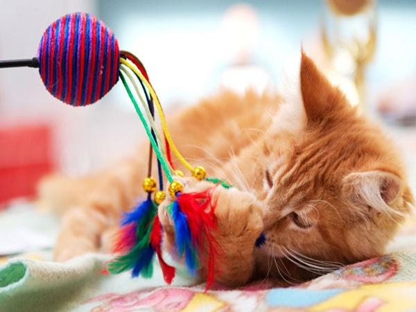 Если у вас скоро появится кошка, изображение №4