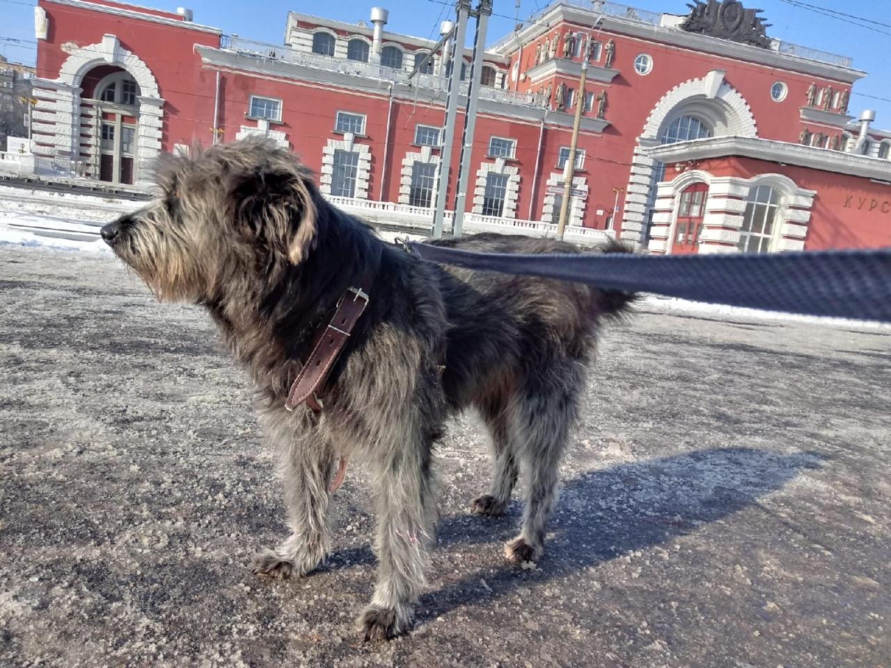 🙏Бродячие собаки из Курска находят дом в Бельгии.