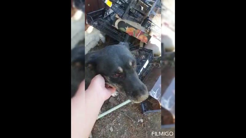 Видео от Отдам животных в Краснодаре и Кр крае