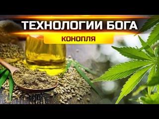 КОНОПЛЯ: ТЕХНОЛОГИИ БОГА    Конопля  самое ценное растение, 38299
