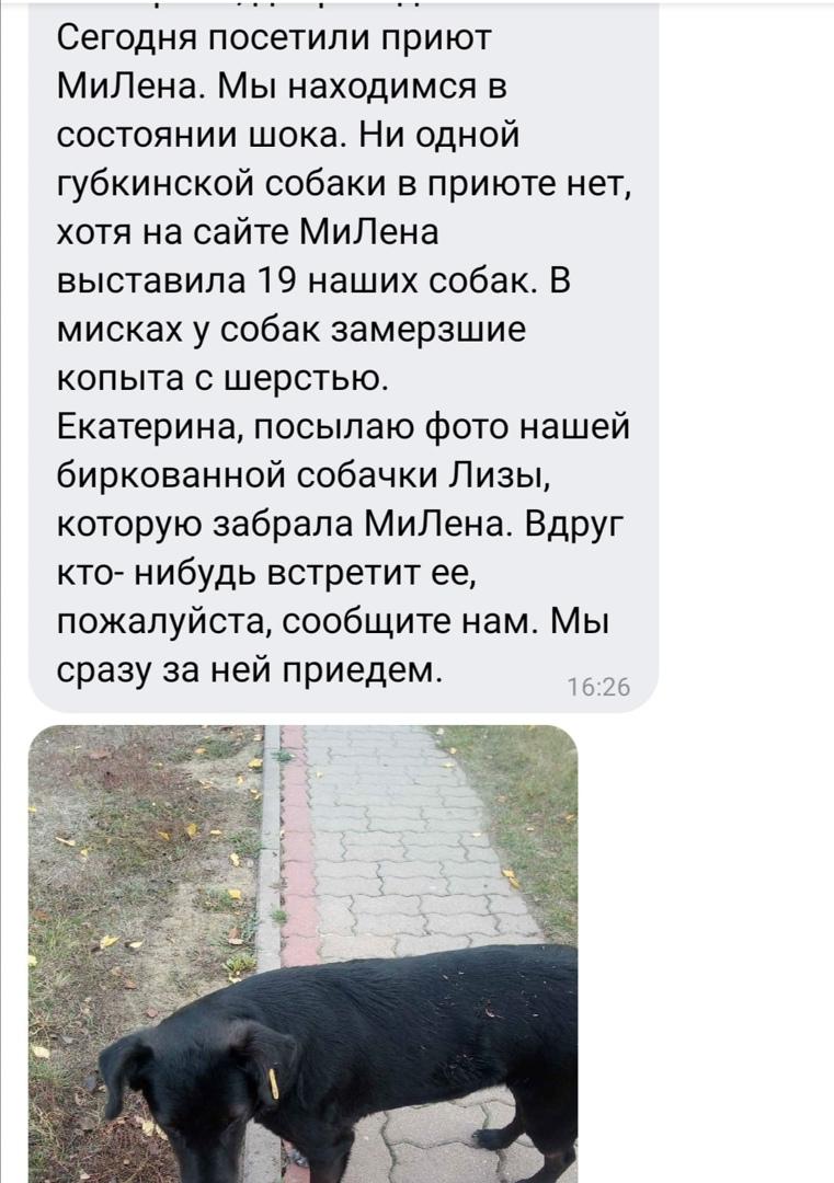 """Мы знали о существовании приюта ООО """"Милена"""" г. Фатеж ранее, но некоторые волонт..."""