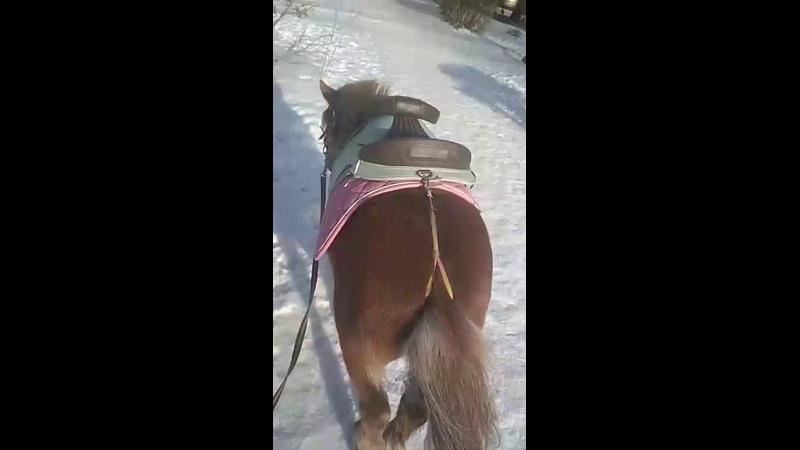 Вячеслав Дашеев - Live