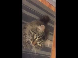 Video by Помощь бездомным животным г.Бобруйска.