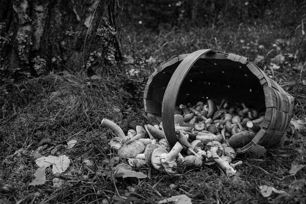 В Брянской области трое грибников трагически погибли в лесу https://newsbryansk.ru/fn_76   За текущий сезон волонтерам и спасателям... ... [читать продолжение]