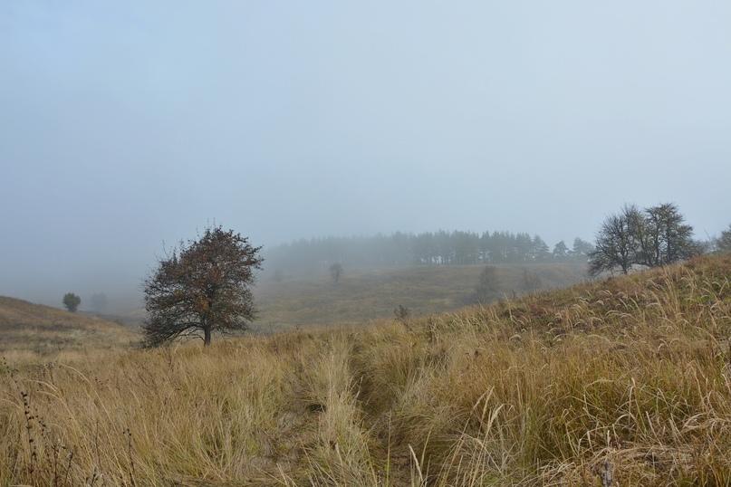 ???? Доброе утро! Сегодня нас ждёт дождливая погода. Фото: [id291330848|Елена Иванова]. #ПриродаКурскогоКрая #ПрогнозПогоды Курск