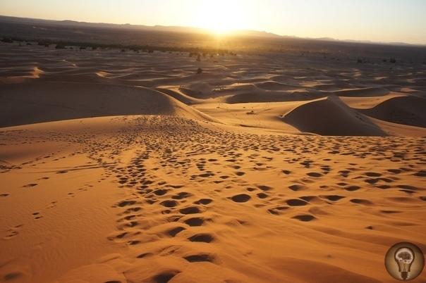 Палеонтологи: Сахара была морем, где жили гигантские сомы и морские змеи Пустыня Сахара не всегда была таким безжизненным местом, каким является в настоящее время. Ранее этот гигантский кусок